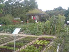 Beispiele für Beetbepflanzungen