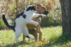 見事なネコパンチ!!