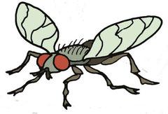 """Eine Fliege aus """"Warum fallen Kängurus nicht von der Erde?"""""""