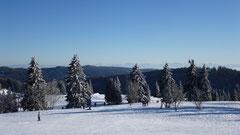 Schneelandschaft auf dem Feldberg am 15.01.2012