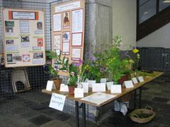 Exposition de fleurs sauvages