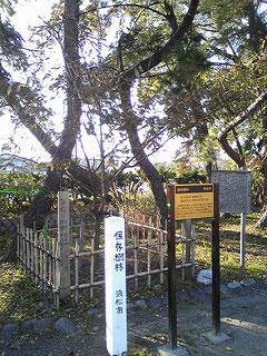 蒲神明社の蒲ザクラ