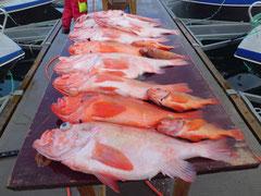 6kg Rotbarsche vom Oksfjord