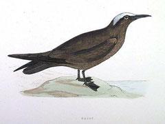 http://www.oiseaux.net