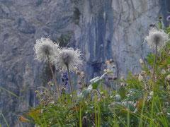 Wilde Mändle im Kleinwalsertaler Herbst zu entdecken wegezumsein.com