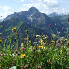 Den Bergen so nah - der Widderstein im Kleinwalsertal - Bewegung und Natur erleben WegezumSein.com
