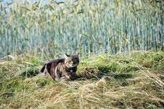 Stubentiger auf Mäusejagd Foto: Leo Wyden