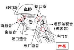 図6 子音の発声場所