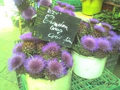 Cardoons at market