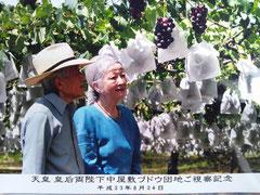 長野県東御市の巨峰こだわり