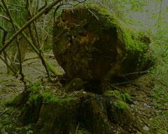 Naturverwertung