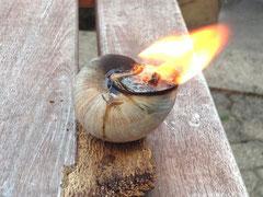 Feuer ist wichtig um Licht zu spenden, hier die Notkerze aus der Natur