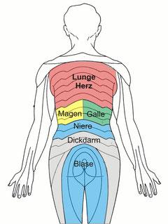 Die körperlichen Zuordnungen innerer Organe
