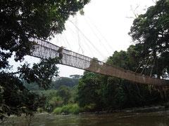 Gabon: pont de liane a Poubara