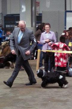 Adominos ToJo´s Apeel at DW Tibet Terrier Peter Künzel Oelde