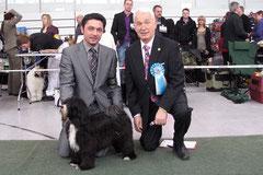 CAC Glauchau 2011_Tibet Terrier_Peter Künzel_Oelde