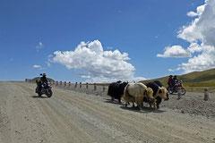 Alpabfahrt auf Tibetisch.