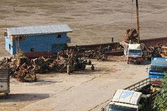 Tropenholz-Export nach China und Thailand.