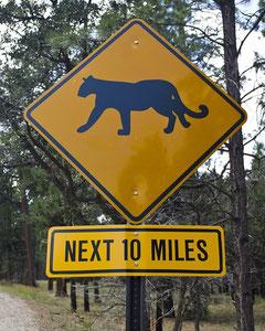 Warnung vor dem Puma!
