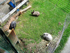 ... ein Tunnel in den neuen Kaninchen-Auslauf im Grünen 07-2011
