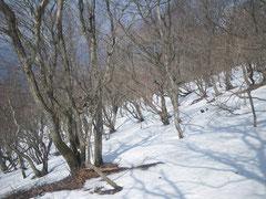 坂下集落からの尾根が合流するあたり。