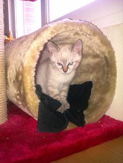 Misu, antes Blancanieves, adoptada