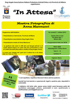 mostra fotografica dog angels