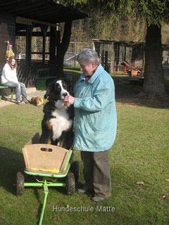 In der Hundeschule Matte werden Welpen im Alter ab der 17. Wochen in der Flegelgruppe spielerisch auf das Leben vorbereitet. Erste spielerische Gehorsamsübungen werden eingebaut.