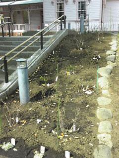 八幡山の洋館 南側階段脇のバラも2007年3月リニューアルされました