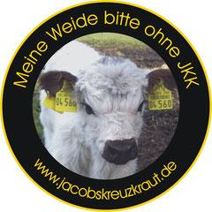 Rinder fressen frisches Jakobskreuzkraut