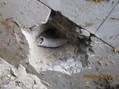 """""""Lampentopfeinbau in die Stützmauer"""""""