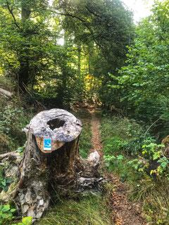Wisper Trails Schwälbchens Flug Trailrunning Wandern Taunus
