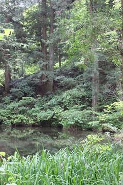 八王子神社 池 全景