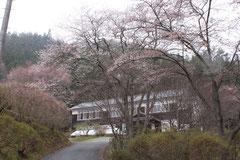 桜 林間学校