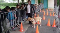 Démonstration de chiens d'aveugle dans la cour de l'école