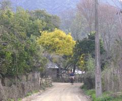 Imagen antigua del sector Plazuela, actualmente el camino se encuentra asfaltado