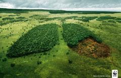 Imagen de WWF