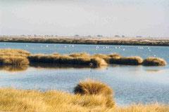 Parque Natural de Doñana. CC. Por Technische Fred.