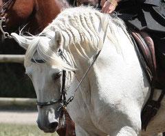 Galan, Equestria 2011.