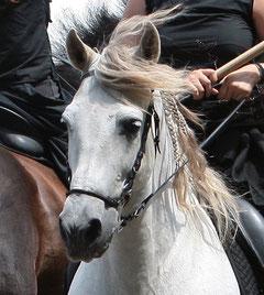 HORTELANO, Equestria 2011.