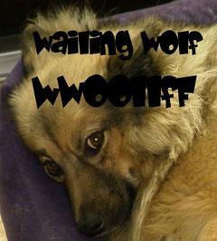 "CD WwoollfF ""Wailing Wolf"""
