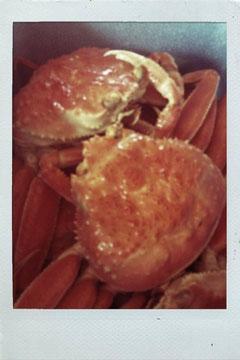 seiko crab