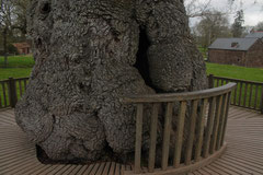 Le refuge de l'abbé au creux de l'arbre.