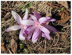 The Light Flower