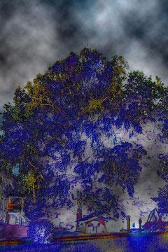 ... als stünde er wahrhaftig wieder vor der großen Birke, die sich in den Wogen des nächtlichen Himmels wiegte ...