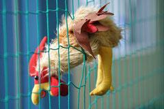 das verrückte Huhn...