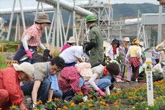 フラワーロードで花の植え込みをされるボランティアの皆さん
