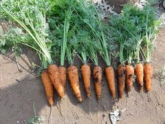 選んで安心、食べて美味しい野菜を作っています