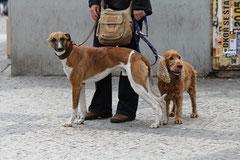 Hunde in Prag