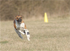 Coursing Spitzerberg April 2010